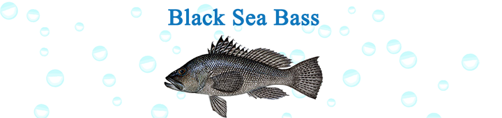 Black-Sea-Bass