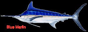 blue-marlin-300x110