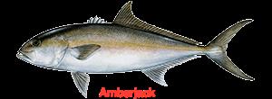 greater-amberjack-300x110