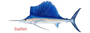 sailfish-300x110