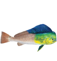 BreakDay Charters